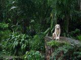 jungle natureal picture 2018