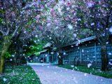 beautiful garden wallpaper 2021