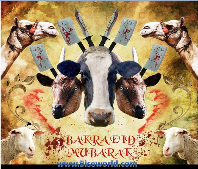 Online Bakra Churi Wallpapers