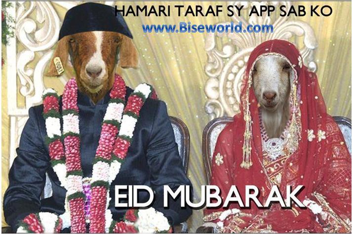 Online Funny Bakra Wallpapers