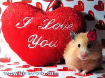Funny Love Valentine Day 2014