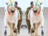 Cow Eid Beautiful Photos