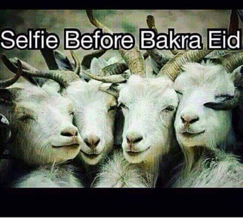 Bakra Eid Selfie Images Photos