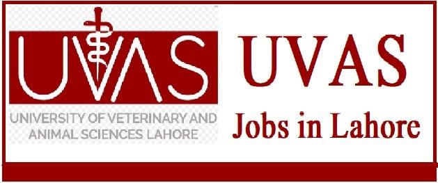 UVAS Jobs 2021 Advertisement Online Apply